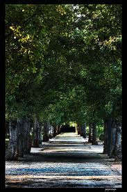Parque García Lorca de Granada - Guía de ocio GRANADA