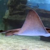 Aquarium de Roquetas de Mar - Guía de ocio ALMERIA