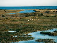 Parque Natural de Aiguamolls de l'Empordà - Guía de ocio GERONA