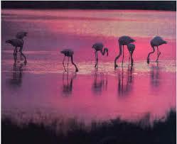 Parque Natural del Delta del Ebro - Guía de ocio TARRAGONA